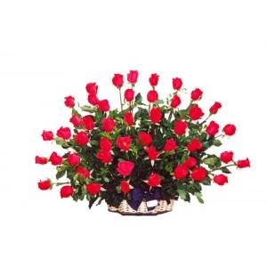 Sofia 48 rosas