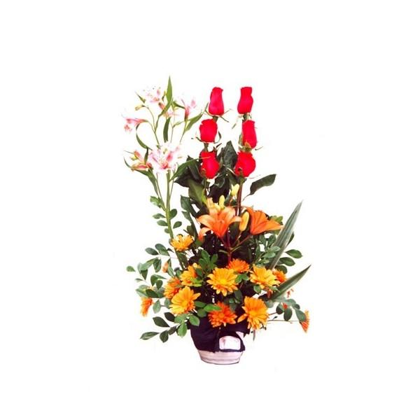 Anais 6 rosas